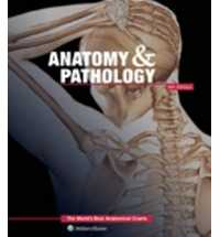 ANATOMY & PATHOLOGY: WORLD'S BEST ANATOMICAL CHARTS e6
